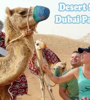 Desert-Safari-Dubai-Packages-4